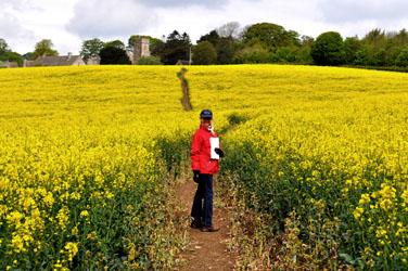 Nancy in a field of Rape