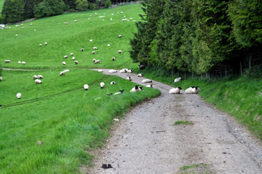 Congestion on the road to Sudeley, Cotswolds, England, UK