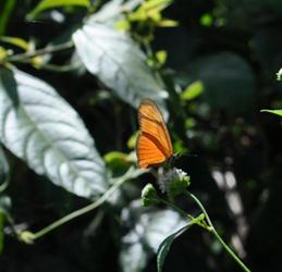 Butterfly, Panama City, Panama