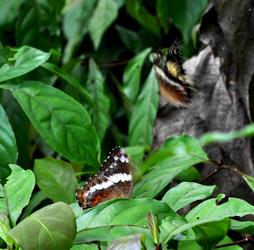 Butterfly, Parque Metropolitano, Panama City, Panama