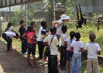 Brown spider moneky, Summit Garden, Panama City, Panama